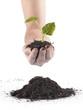 Planta y tierra en la palma de la mano