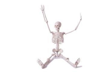 Skeleton isolated on the white background