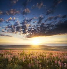 Spring meadow of flowers.