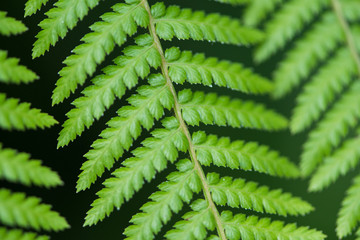 Close up of fern leaves
