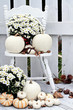 White Pumpkins and Mums