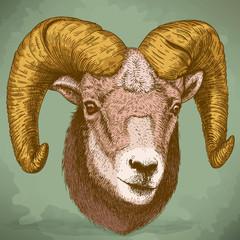 vector illustration of engraving ram head