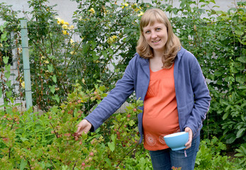 The pregnant woman collects a gooseberry