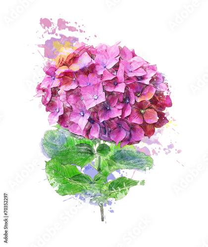 Foto op Canvas Hydrangea Watercolor Image Of Hydrangea Flower