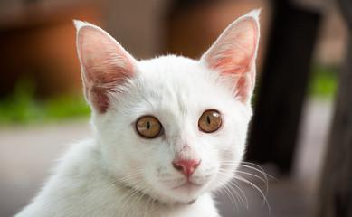 cat sight