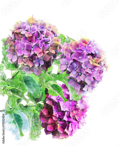 Foto op Canvas Hydrangea Watercolor Image Of Hydrongea Flowers