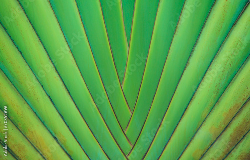 Aluminium Palm boom traveler's palm