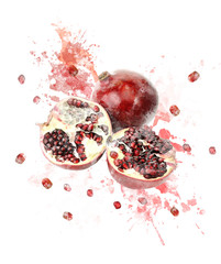 Watercolor Image Of Pomegranate