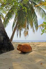 Die Kokosnuss am Strand