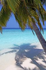 Kokospalme und türkises Meer