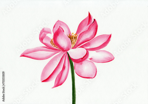 Aluminium Lotusbloem Lotus flower watercolor painting