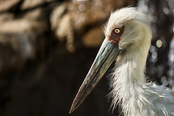 Portrait of a stork, after having a bath