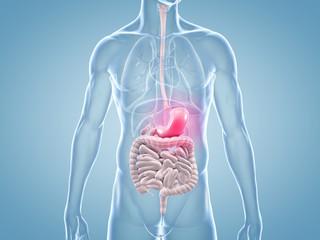 Magen-Schmerzen - anatomische 3D-Illustration