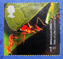 Stamp from the United Kingdom shows image of ant