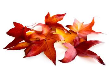 Bunte Blätter liegen auf weißem Untergrund