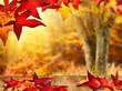 Herbstliche Idylle