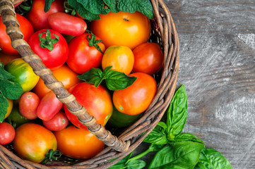 multicolored tomatoes on wooden background