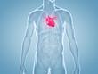Obrazy na płótnie, fototapety, zdjęcia, fotoobrazy drukowane : Herz, Schmerzen, Herzkrankheiten: anatomische 3D-Illustration