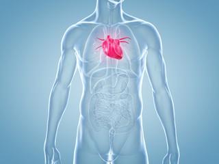 Herz, Schmerzen, Herzkrankheiten: anatomische 3D-Illustration