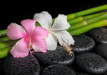 spa concept of zen basalt stones, white and pink hibiscus flower