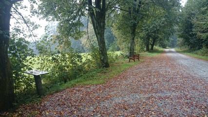 Herbst wald Bank