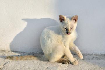 gatto al sole