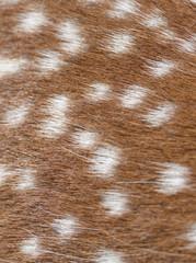Fur of a sika deer