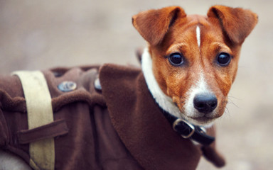 Puppy in coat
