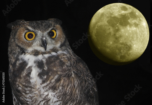 Staande foto Uil A Great Horned Owl and Moon Against Black