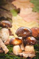 Autumn mushrooms on green moss