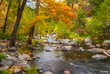 Sedona Foliage on a Cloudy Fall Day