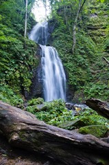 Waterfall of the forest
