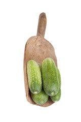 freshly picked cucumbers in a wooden shovel isolated on white ba