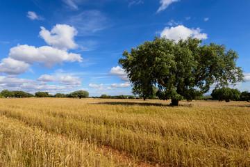 Pelos campos do Alentejo
