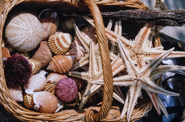 Montenegro, dried starfish and sea urchins for sale