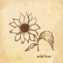 Vintage old background with chamomile with love. Hand drawing.