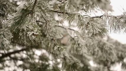 Thaw on the Tree