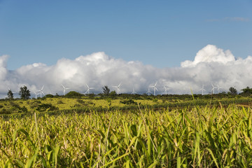 Wind mills on a wind farm on the north shore of Oahu, Hawaii