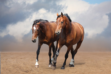 Two brown horses trotting free