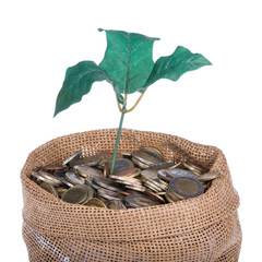 Money bag with coins and money tree