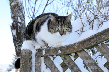 Kleine Katze im Schnee