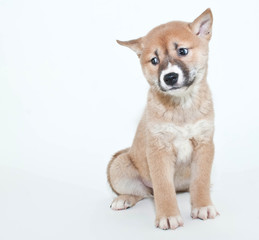 Perplexed Puppy