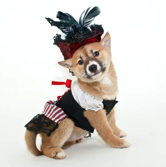 Pirate Puppy.