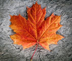 autumn leaf on the ground