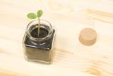 瓶の中の新芽