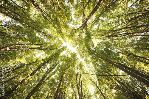 Foto op Canvas Bossen Forest