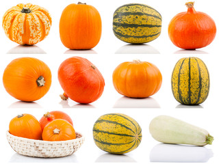 set of colorful pumpkins on white background
