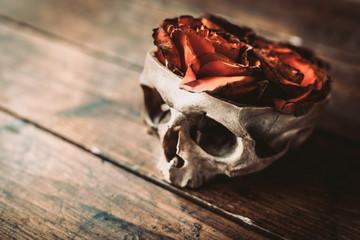 Розы в черепе