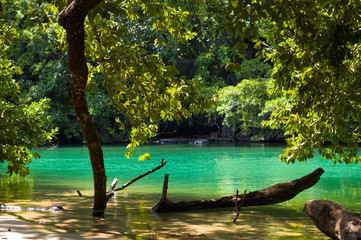 green tropical water with tree