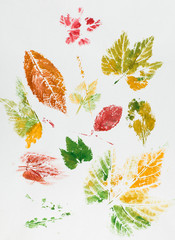 colorful leaf imprint
